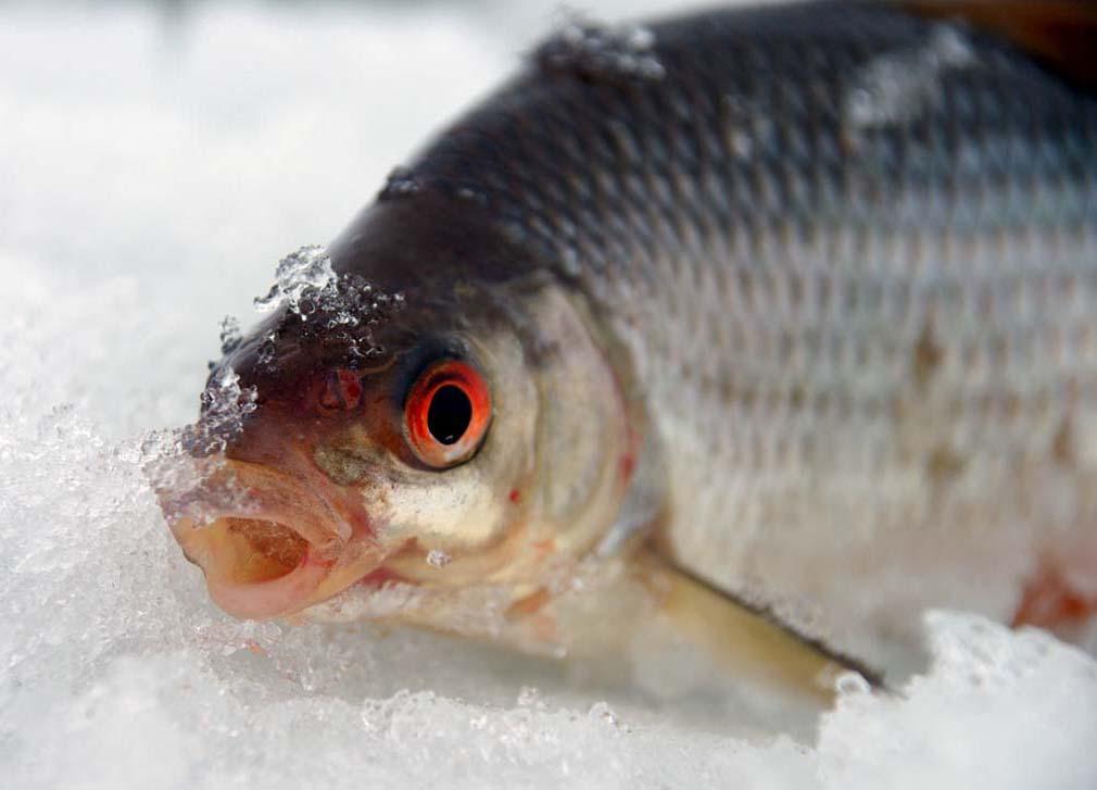 активности рыбы