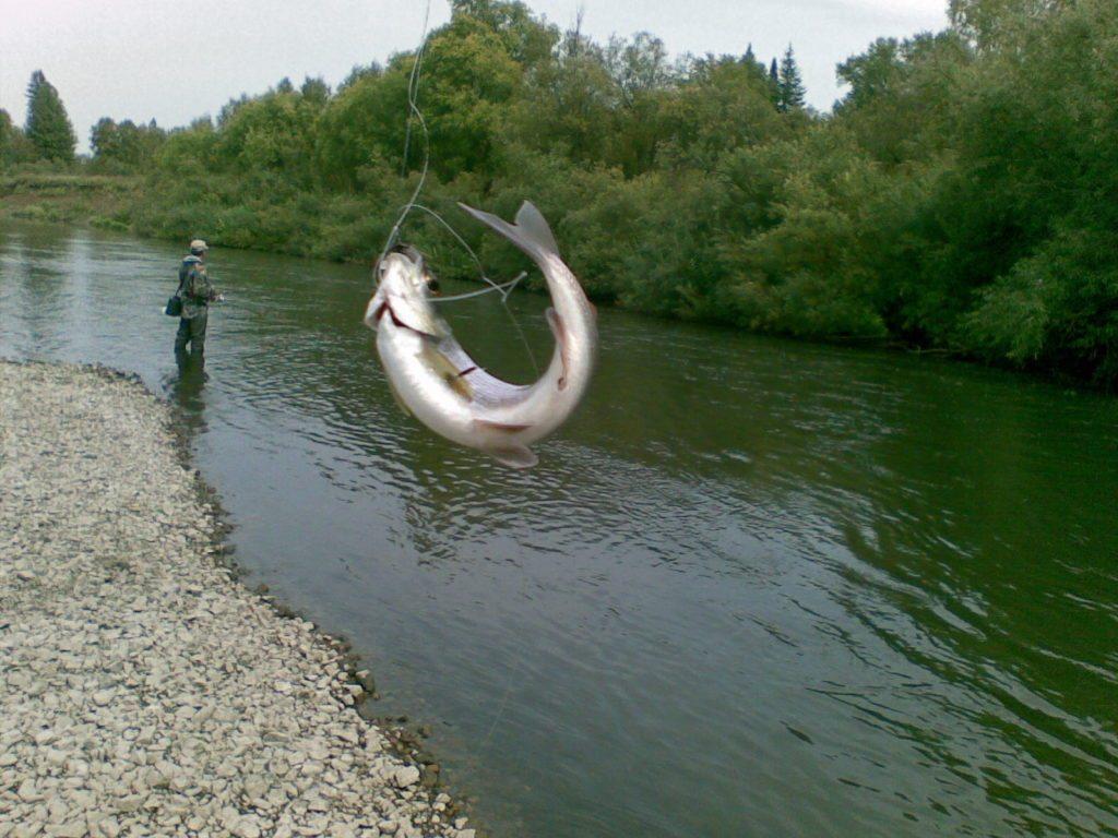 Ловля рыбы нахлестом