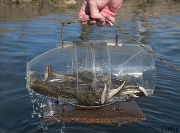 верши для рыбалки