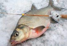 Снасти для ловли леща зимой