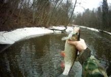 Как ловить голавля весной