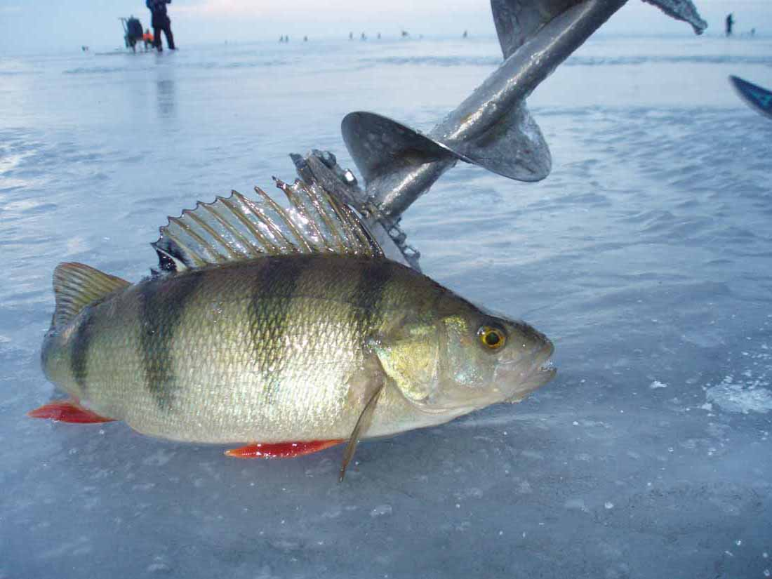 Зимняя Рыбалка Снасти На Окуня