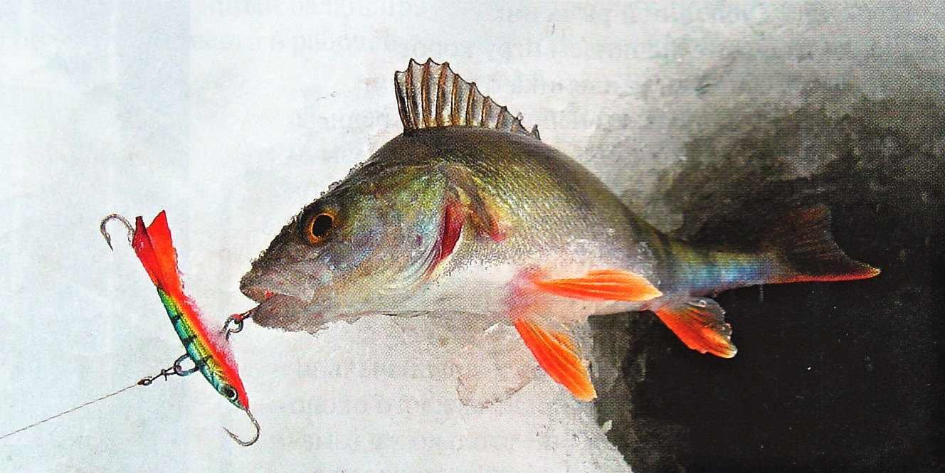 Балансиры для рыбалки на окуня