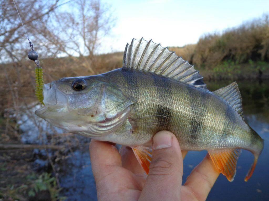 Рыбалка на окуня в деталях