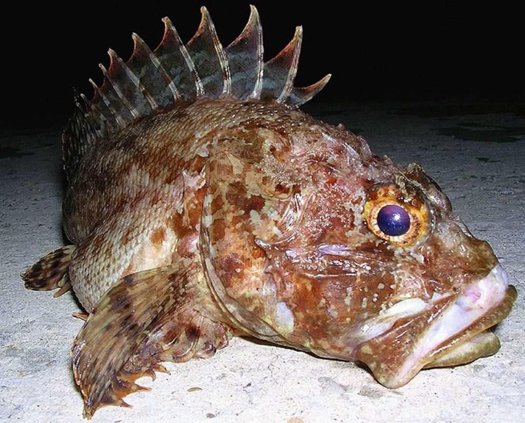 наличия у рыб болевых рецепторов