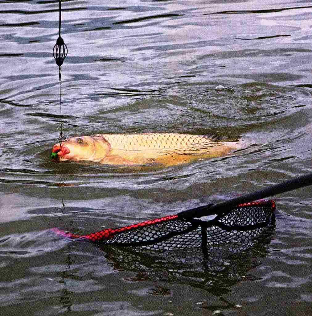 Какое давление для рыбалки лучше летом