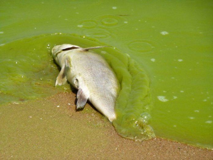 Учёные из США сумели предотвратить цветение токсичных водорослей