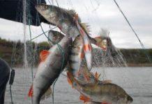 Волгоградскому браконьеру грозит два года коллонии