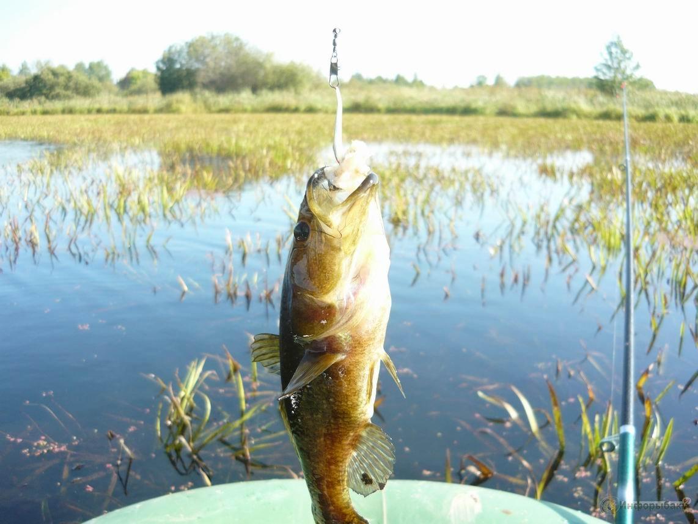 когда клюет рыба летом
