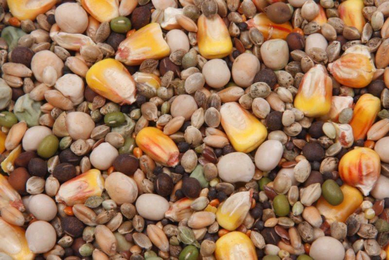 Зерновые смеси для карпа