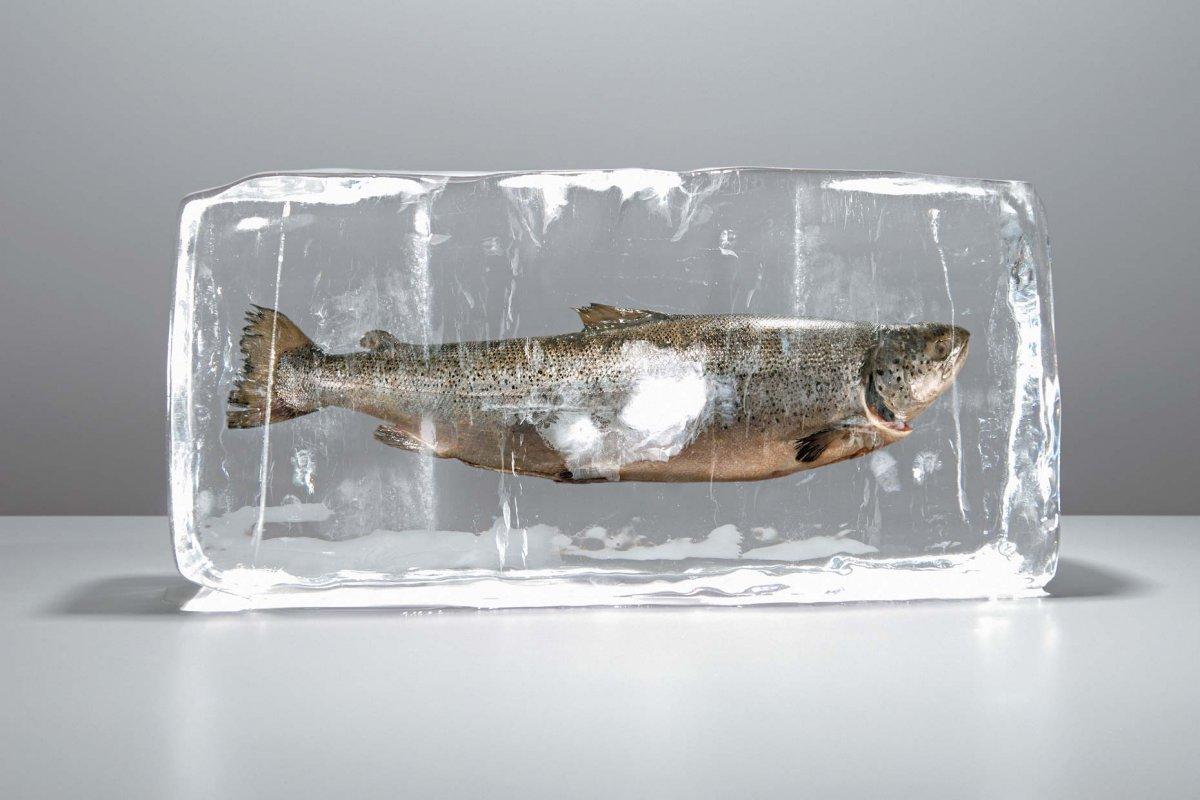 замороженная рыба