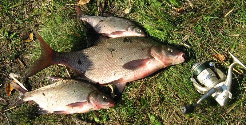 способы прикормки рыбы зимой