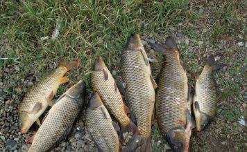 Ловля сазанов озеро Кугурлуй