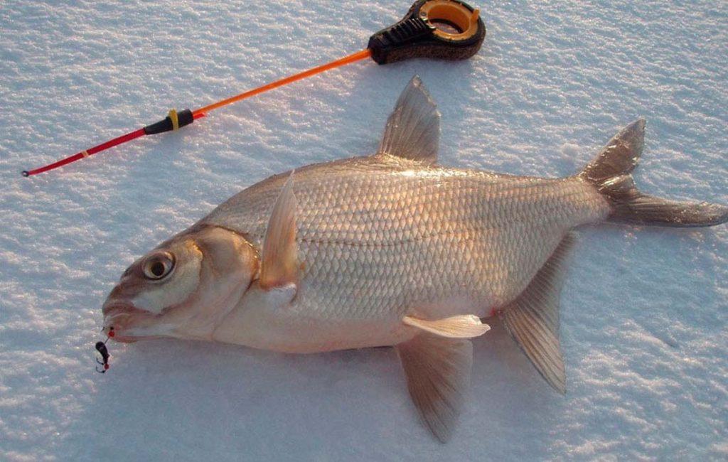 Ловля леща зимой фото