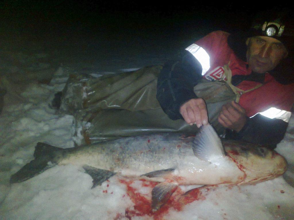 Ночная рыбалка на толстолобика
