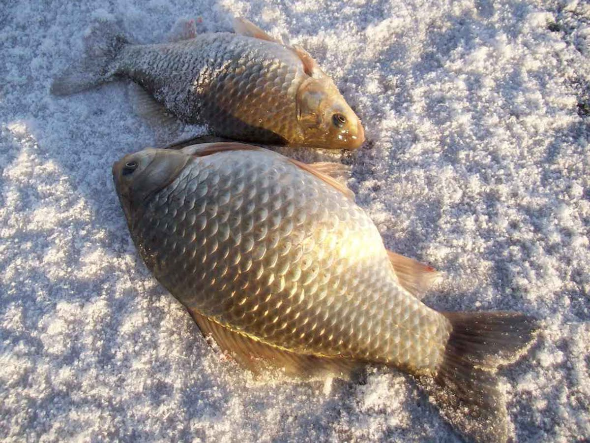 Рыбалка на карася зимой