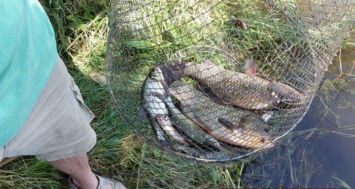 Ловля карася весной на водохранилище: в чем особенности этого ...