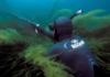 маска для подводной охоты миниатюра