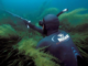 Выбираем маску для подводной охоты