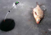 зимняя ловля леща миниатюра