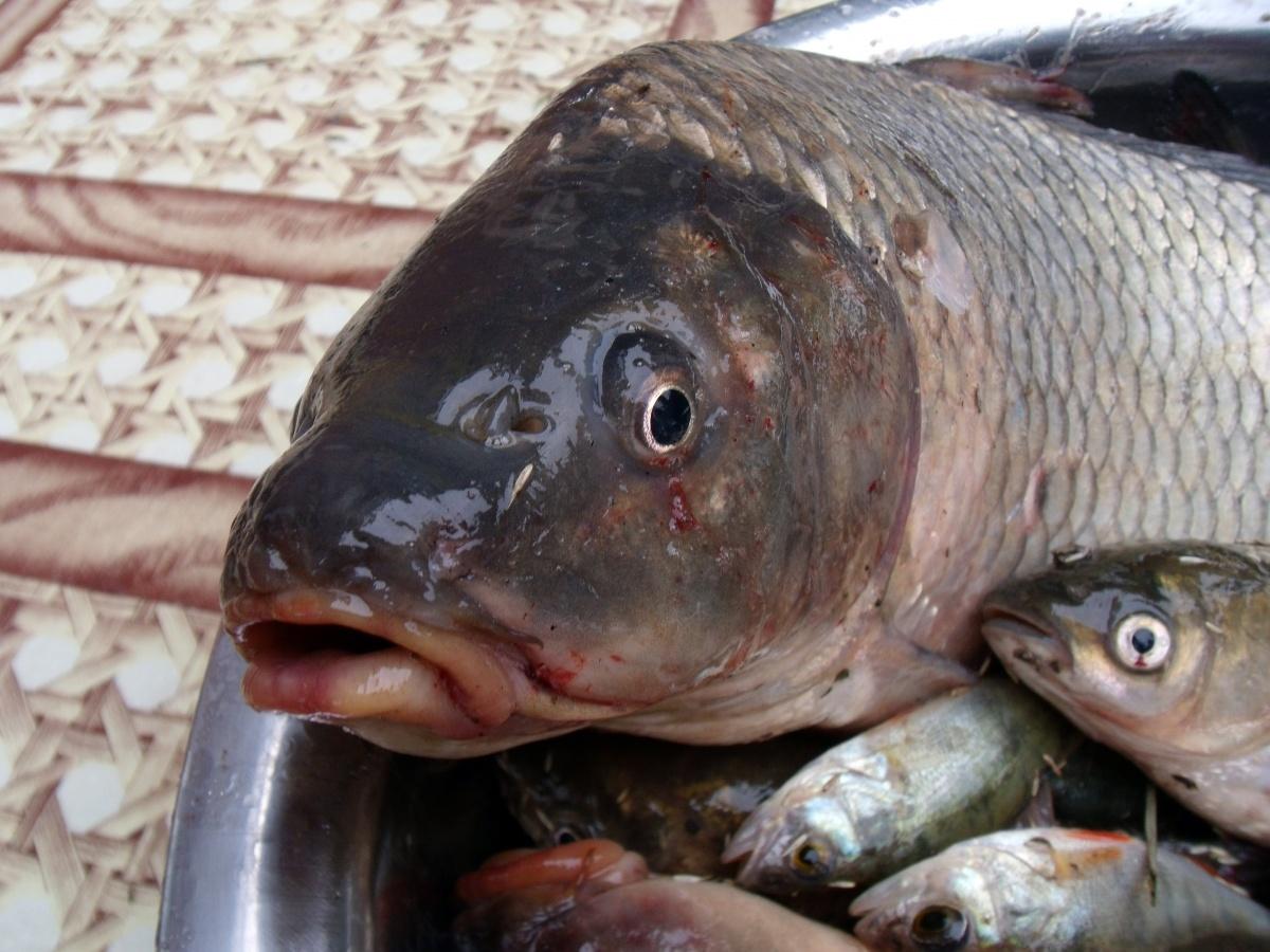 в какую фазу луны клюет рыба