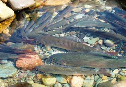 рыбалка на утином озере в дагестане