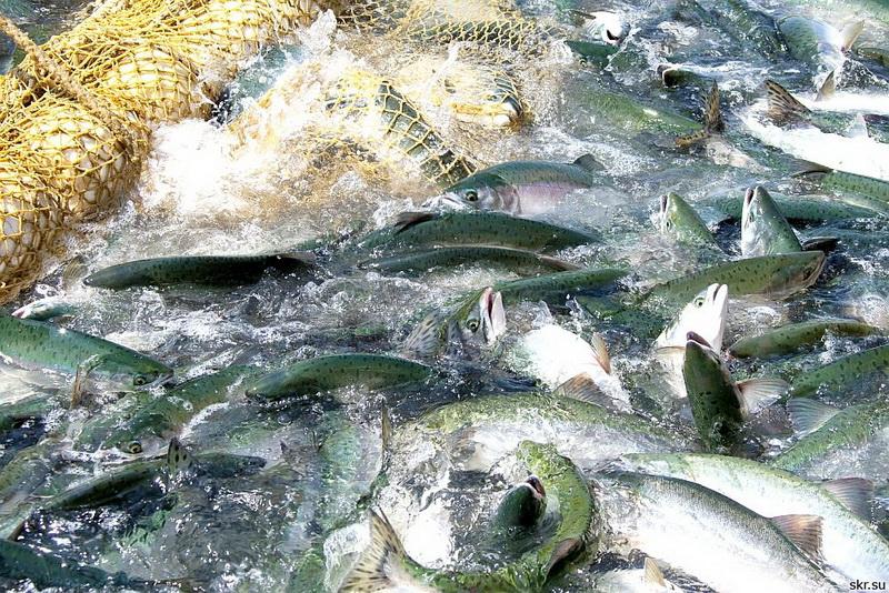 прогноз клева рыбы в чкаловске нижегородской области