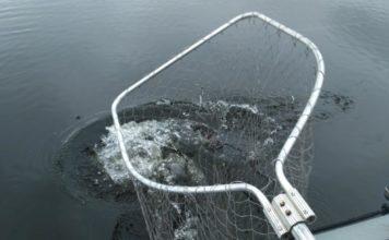Отчет о рыбалке: 12 ноября 2017, безымянное водохранилище