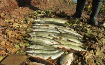 Отчет о рыбалке: Кама, река 19 сентября 2017 — 20 сентября 2017
