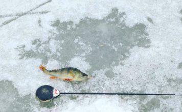 Отчет о рыбалке:  Пышма, река 6 ноября 2017