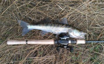 Отчет о рыбалке: Енотаевка река 20 — 21 октября 2017,