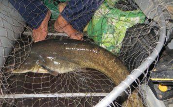 Отчет о рыбалке:Воронежское водохранилище  04 августа 2017,