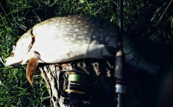 Отчет о рыбалке: безымянный платник 29 сентября 2017