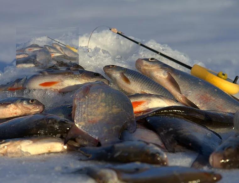 Ловля плотвы зимой - основные советы про эту рыбу