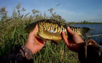 Отчет о рыбалке: пруд Лопатино 25 октября 2017