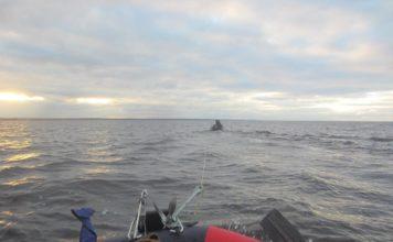 Отчет о рыбалке: Канонерский фарватер 23 октября 2017