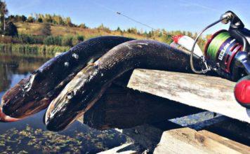 Отчет о рыбалке: Зуша, река 30 сентября 2017