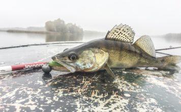 Отчет о рыбалке: 09 ноября 2017, Днепр, река
