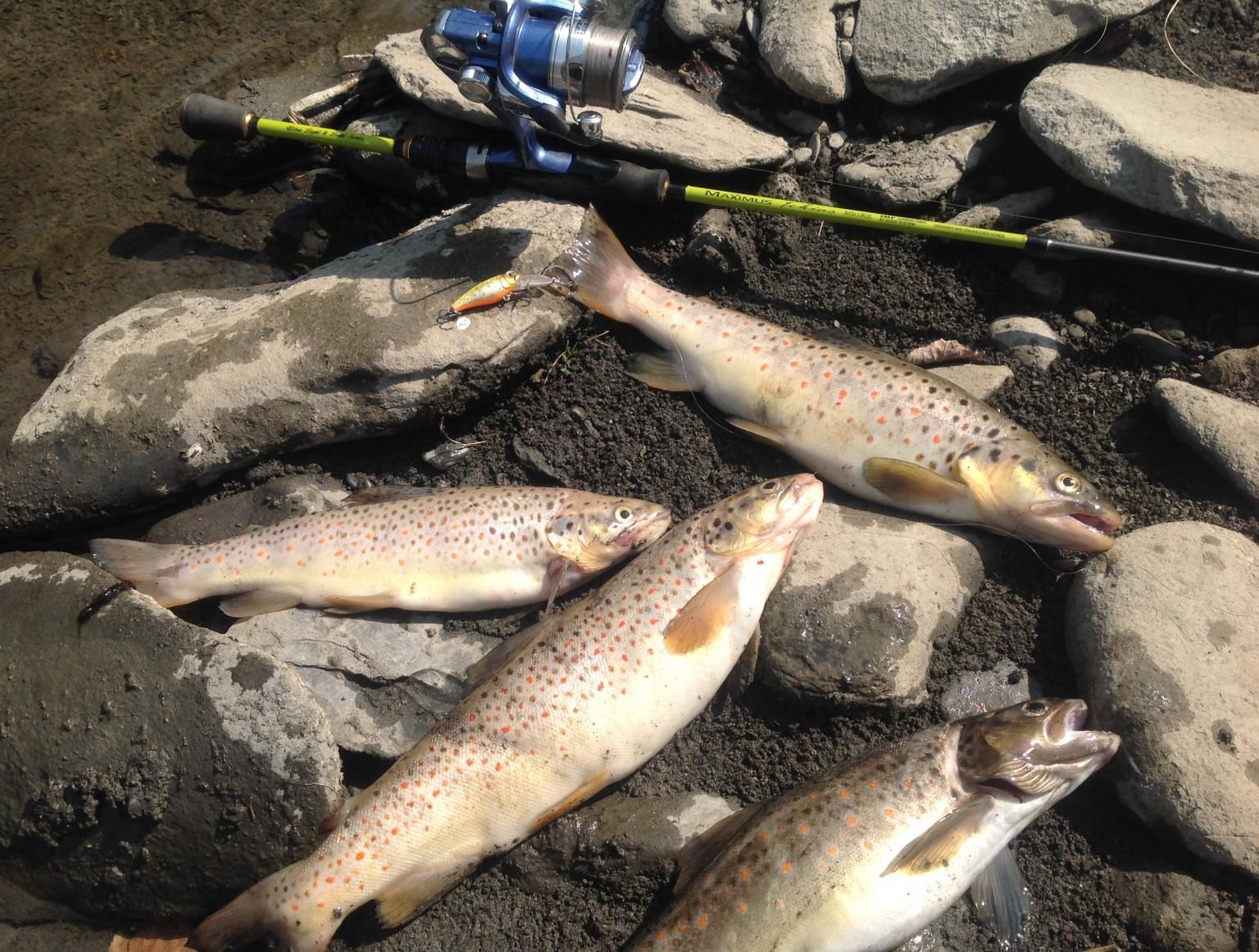 Отчет о рыбалке реках рыбалка на
