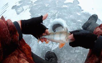 Отчет о рыбалке: 18 ноября 2017, Белоярское водохранилище