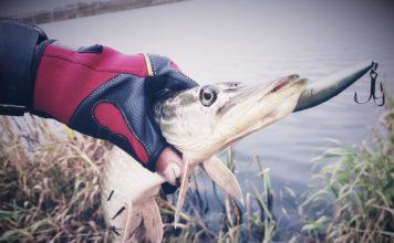 Отчет о рыбалке: пруд АЛЁНОВКА  21 октября 2017