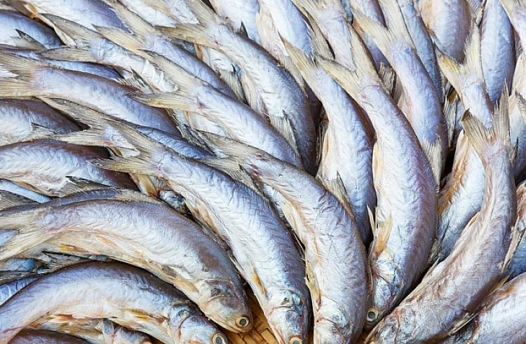 прогноз ловли рыбы в новосибирской области отчет