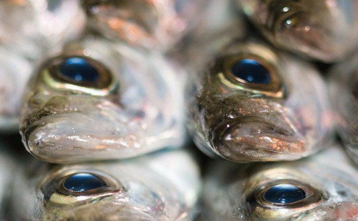 Цены на некоторые виды морепродуктов в Японии