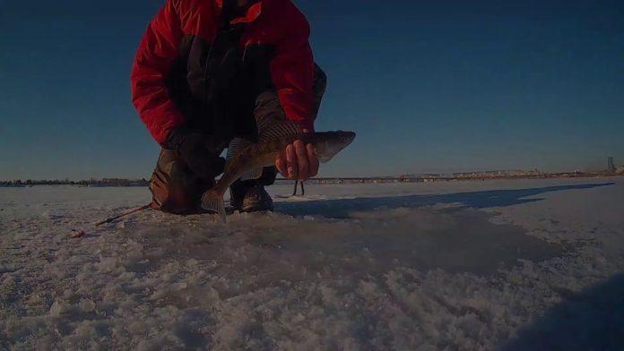ловля судака летом с лодки видео