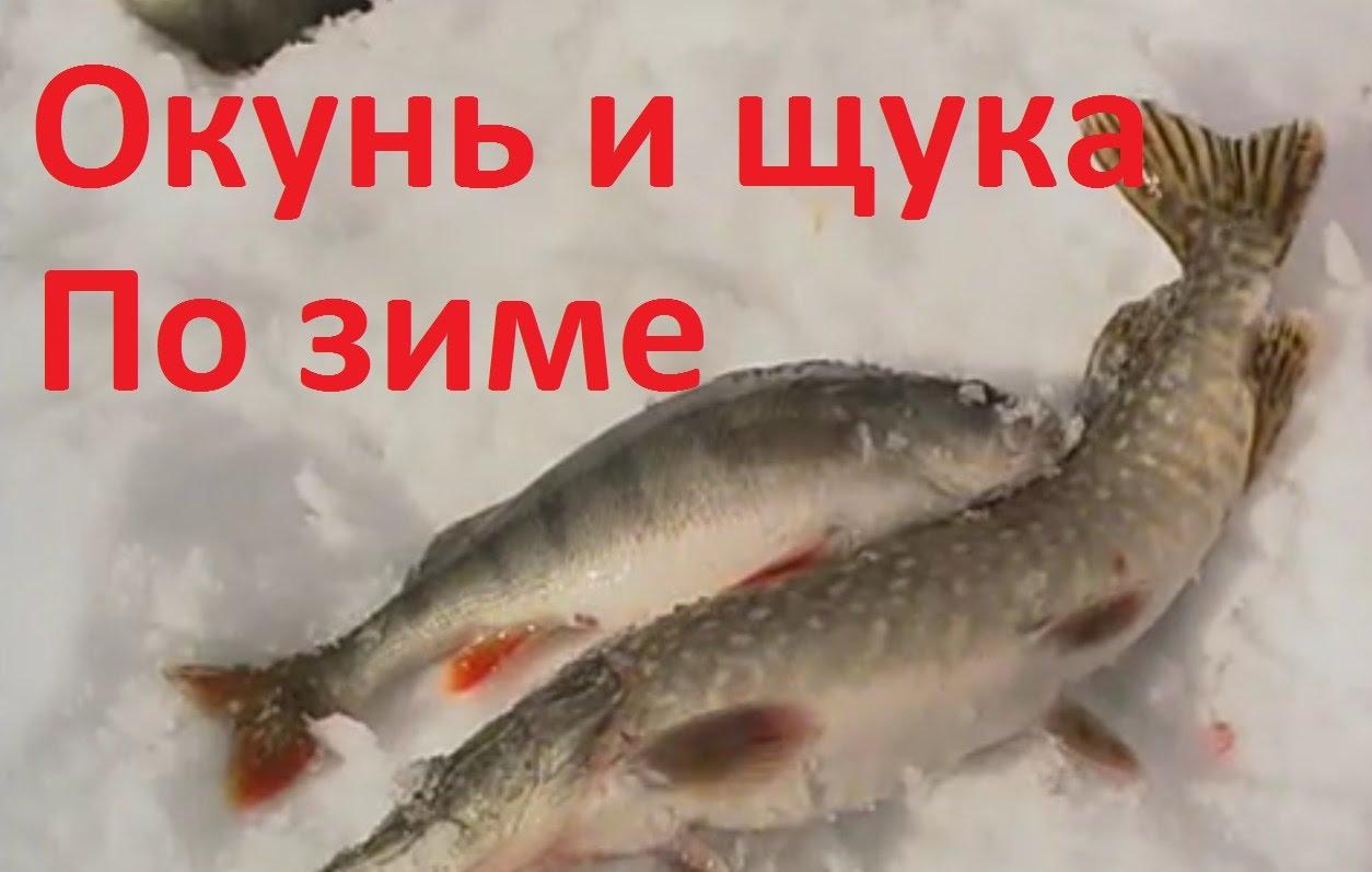 прогноз клева рыбы в нижнем новгороде активатор клева
