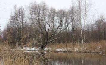 Отчет о рыбалке: Ока, река