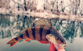 Отчет о рыбалке: Зуша, река