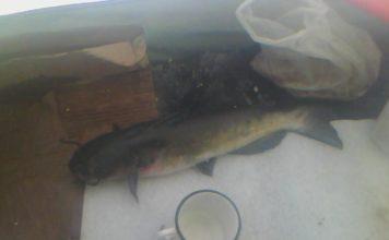 Отчет о рыбалке: Рефтинское водохранилище