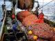 Ученые оценили перспективы рыбная ловля сельди на дальнем Востоке бассейн