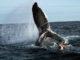 Страны ЕС и ряд стран мира осудили Японии для ловли китов